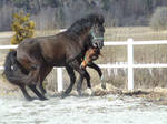 horse stock 24