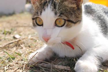 Little cat by RevinFilms