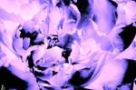 Radiant Peony by sirelmy