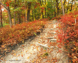 Fall Path by JMCS