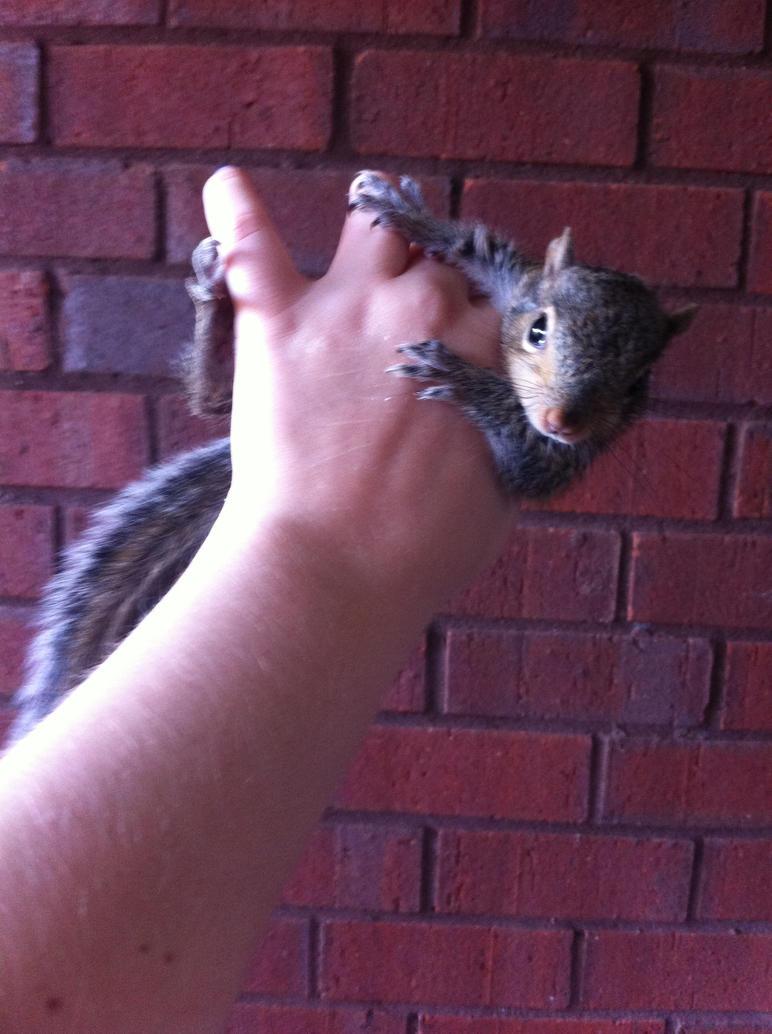 Stop Squirreling Around by MrGrowlz