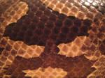 Snake Skin Texture 2