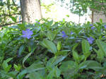 Blue Flowers Stock