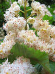 White Puffy Flowers Stock