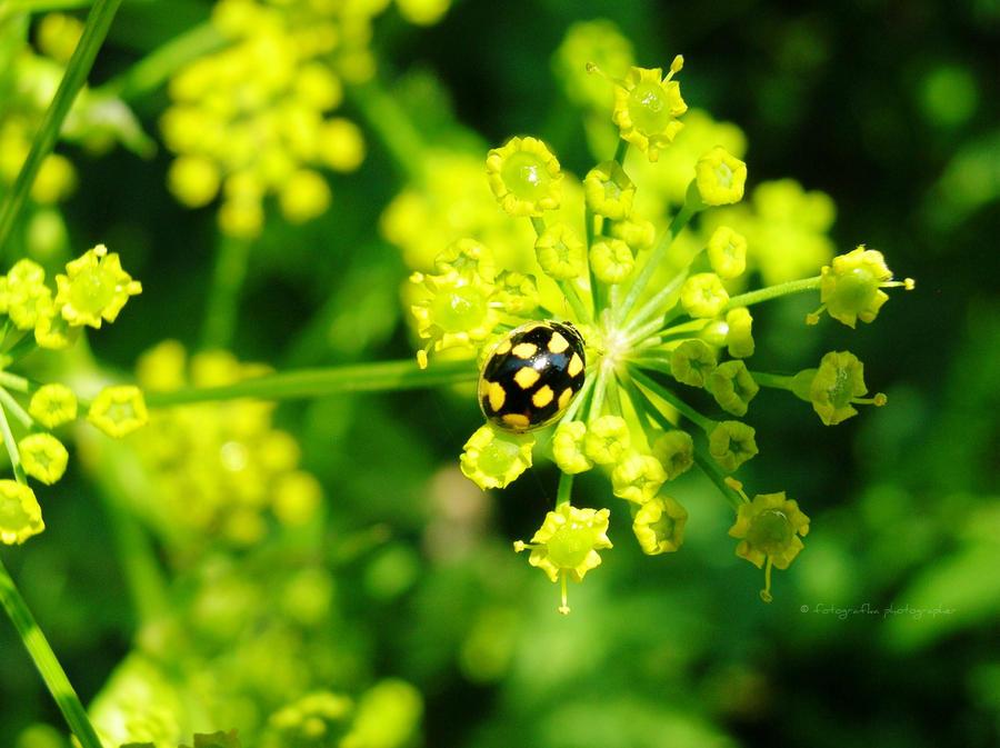 Ladybird by fotografka