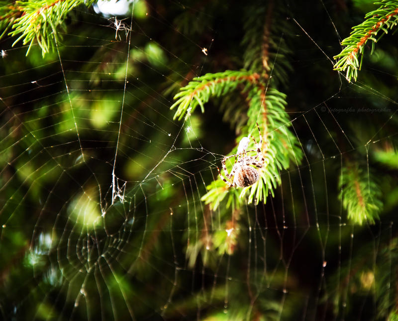 Make a cobweb by fotografka