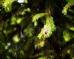 Make a cobweb