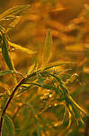 Leaves by fotografka