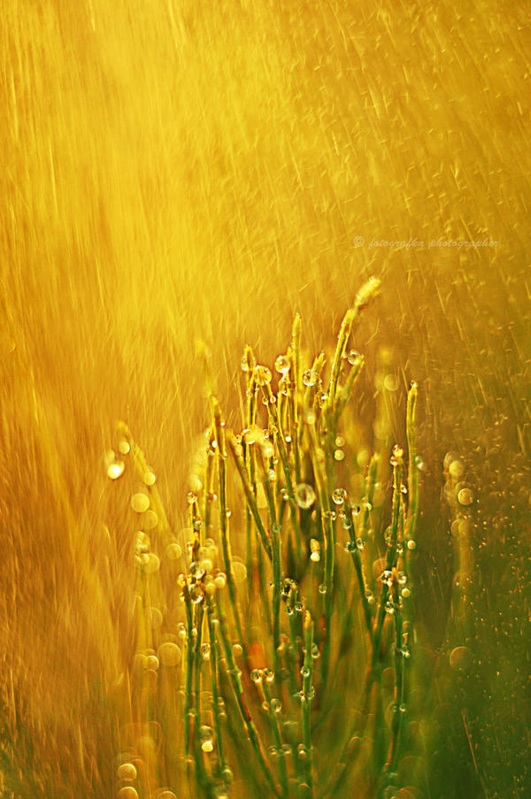Golden rain by fotografka