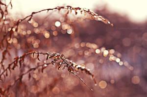 Ice bokeh by fotografka