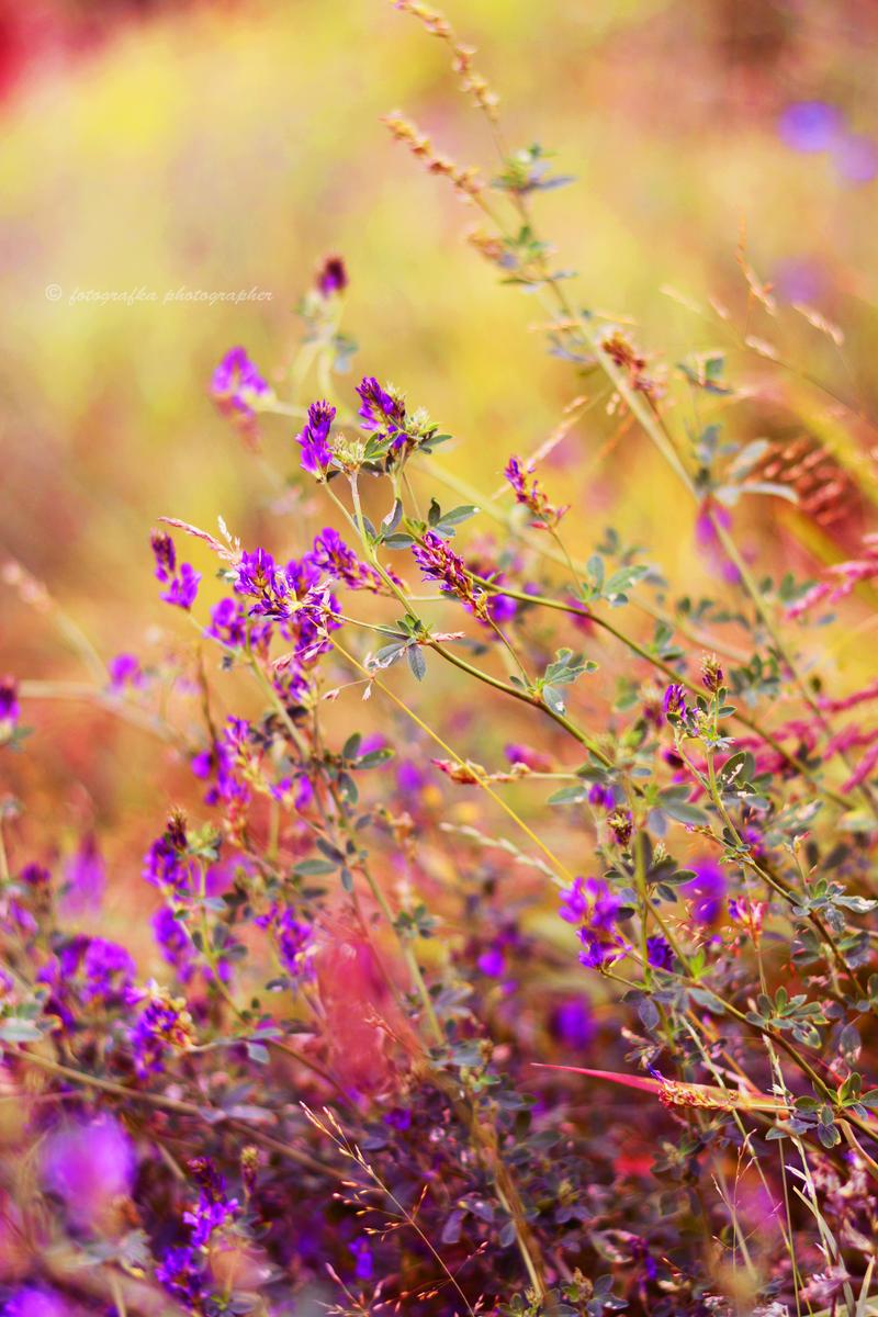Summer feel by fotografka