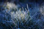 Frost by fotografka