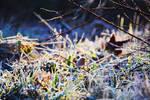Colors in winter by fotografka