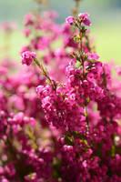 Pink by fotografka