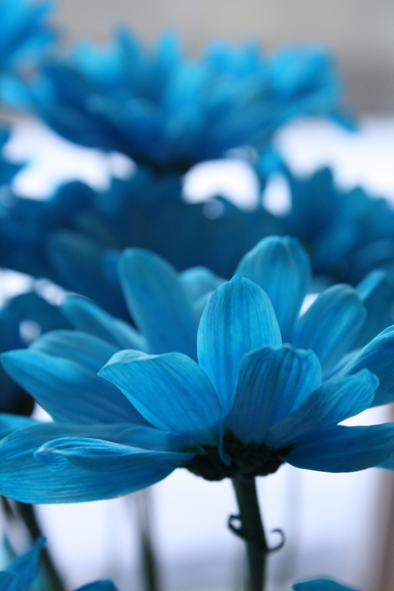 Plavo kao ... - Page 6 Blue_all_by_xninjamermaidx-d3ggdh6