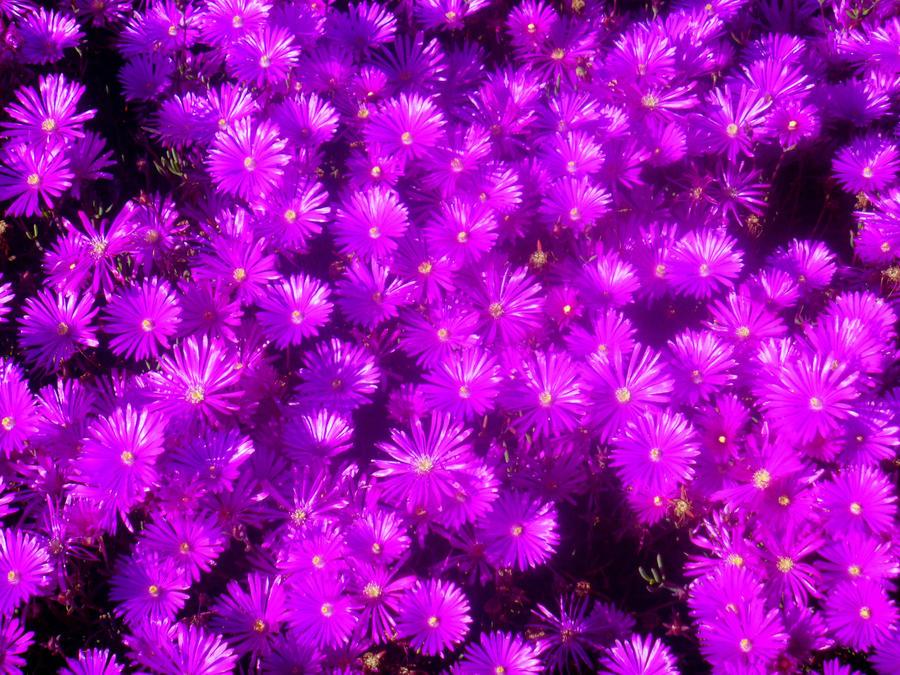 Bright Purple Flowers by sakurarocket