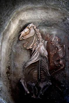 ancestor horse