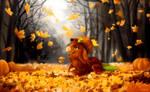 DTA Autumn is here already