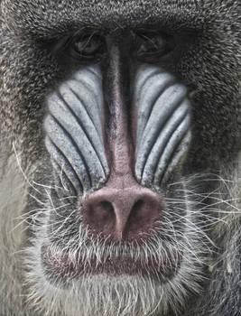 Zoo Animals - Low-Key 001