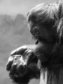 Zoo Animals - Low-Key 002
