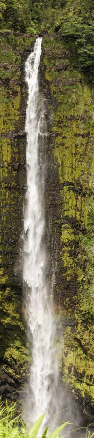 Akaka Falls - 002