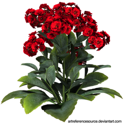 Stock:  Red flowers with green leaves PNG by ArtReferenceSource