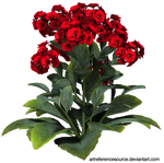 Stock:  Red flowers with green leaves PNG