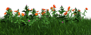 Free PNG:  Grass and Flowers