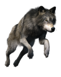 Free stock PNG:  Wolf