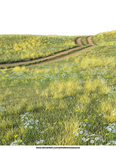 Free Background PNG:  Field with dirt road