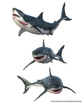 Free Stock PNG:  Shark from three angles