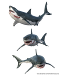 Free Stock PNG:  Shark from three angles by ArtReferenceSource