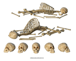 Free Stock PNG:  Skulls And Skeletons
