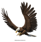 Free Stock PNG:  Eagle in flight