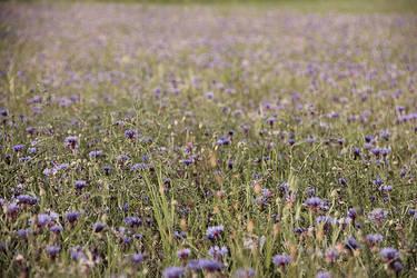 Flowers by raihaneh90