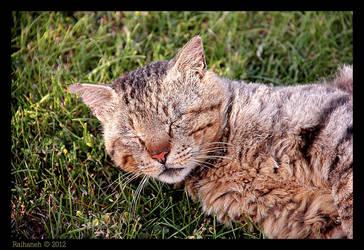 Cat Cat! by raihaneh90