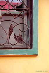 The Broken Window by raihaneh90