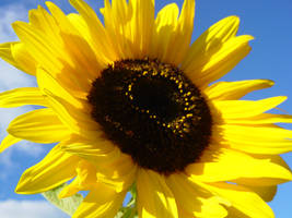 SuNfLoWeR by purelycreativejuice