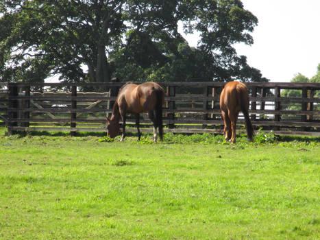Photo #36 -- Horses - Shot 1