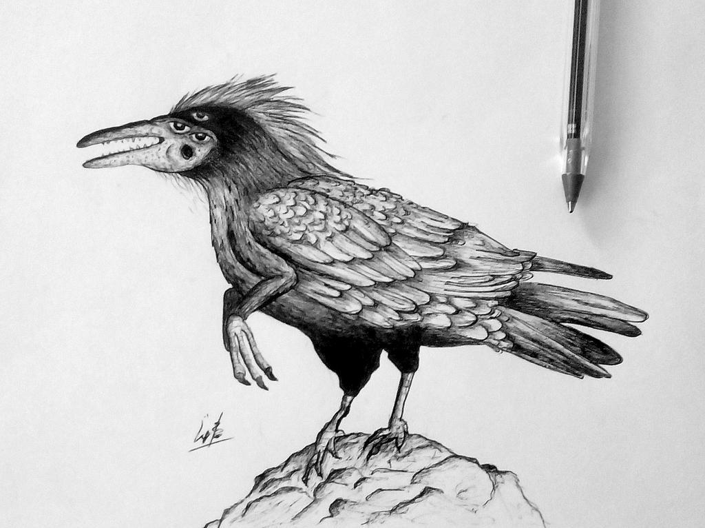 Crow by mornosm