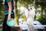 Czech championship in dogfrisbee-