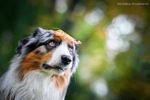 Autumn is here by KristynaKvapilova