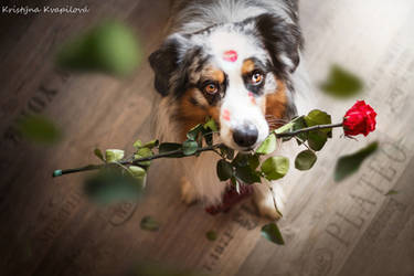 Happy Valentine's day by KristynaKvapilova