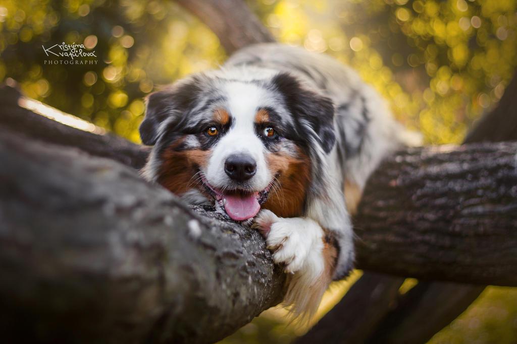 Charlie on the tree by KristynaKvapilova