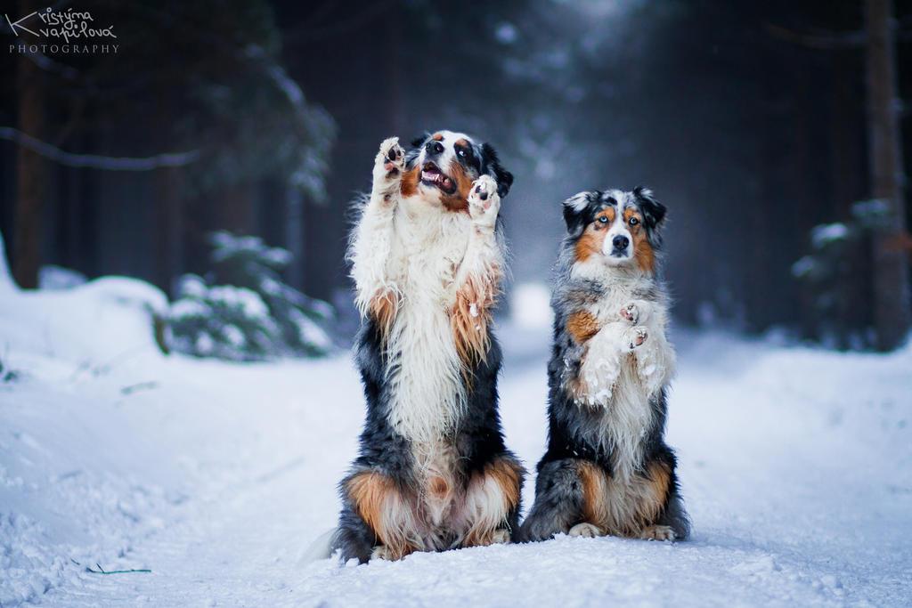 Best Friends by KristynaKvapilova