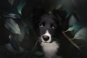 Little Devil by KristynaKvapilova