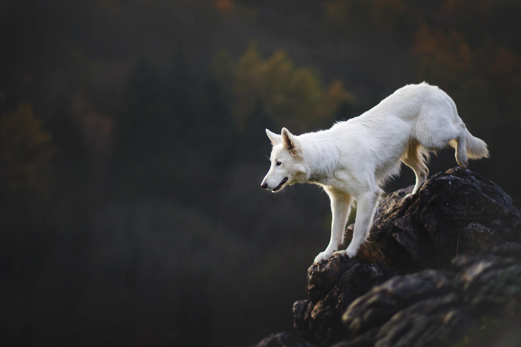 Like white wolf by KristynaKvapilova