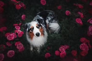 Charlie in wonderland by KristynaKvapilova