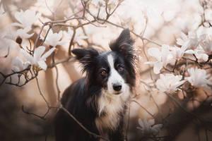 Flower portrait by KristynaKvapilova