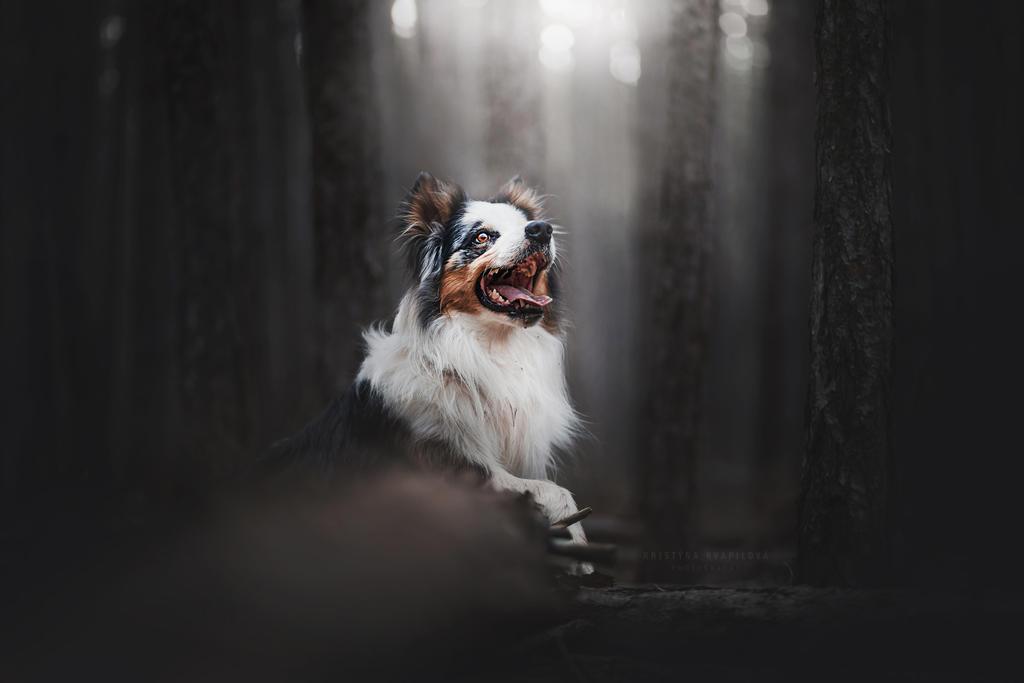 Ash by KristynaKvapilova